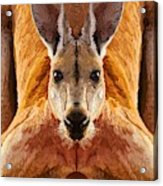 Big Boy Red Kangaroo   Acrylic Print