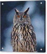 Big Eurasian Eagle Owl With Snowflakes Acrylic Print