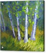 Birch Light Landscape Acrylic Print