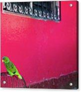 Bird On Cage Acrylic Print