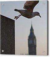 Bird Takeoff Acrylic Print