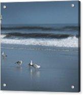 Birds And Waves Acrylic Print