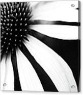 Black And White Flower Maco Acrylic Print