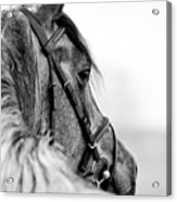 Black-and-white Portrait Of A Sports Acrylic Print