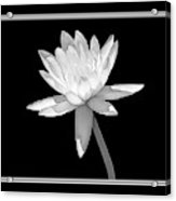 Black And White Water Lily Acrylic Print