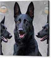 Black German Shepherd Dog Collage Acrylic Print