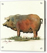 Black Iberian Pig Acrylic Print