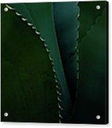 Blades Of Agave Acrylic Print