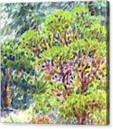 Blake Garden, Berkeley Ca Acrylic Print