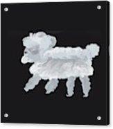 Blanco Acrylic Print
