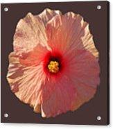 Blooming Hot Acrylic Print