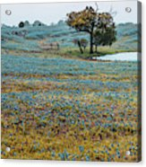 Blubonnet Field Of Dreams Panorama Ennis Texas Photograph By Gregory Ballos