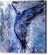 Blue Hummingbird Acrylic Print