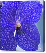 Blue Vanda Orchid Flower Close-up Acrylic Print