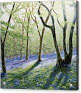 Bluebell Wood Acrylic Print