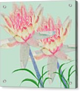 Blush Of Pink Acrylic Print