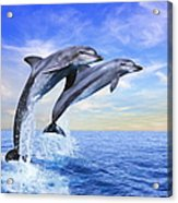 Bottle-nose Dolphins Tursiops Truncatus Acrylic Print