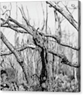 Branches In Black And White Acrylic Print