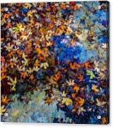 Bright Beautiful Fall Foliage Floating Acrylic Print