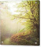 Broceliand Path Acrylic Print