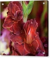 Brown Jewel 5. The Beauty Of Gladiolus Acrylic Print