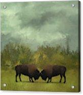 Buffalo Standoff - Painting Acrylic Print