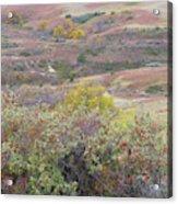 Buffaloberry Prairie Acrylic Print