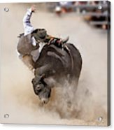 Bull Riding Acrylic Print