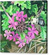 Bumblebee's Lunchtime Acrylic Print