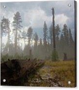 Burned Trees At Lassen Volcanic Acrylic Print