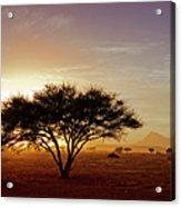 Burning Desert Acrylic Print