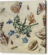 Butterflies, Clams, Insects Acrylic Print