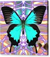 Butterfly Patterns 20 Acrylic Print