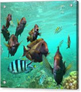Butterflyfish And Sergeant Major Acrylic Print