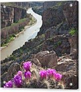 Cactus Flowers Overlooking The Rio Acrylic Print