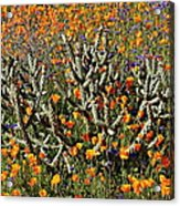 Cactus Poppies And Bluebells Acrylic Print