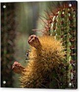 Cactus With Beetle Acrylic Print