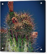 Cactus With Pink Flower Acrylic Print