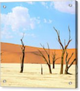 Camel Thorn Trees In Sossusvlei, Namibia Acrylic Print