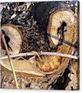Canal Stumps-017 Acrylic Print