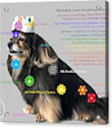 Canine Chakras Acrylic Print