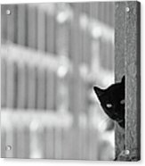 Cat In Cemetery Acrylic Print