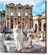Cat In Front Of The Library Of Celsus Acrylic Print
