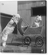 Cat Pushing Cat In Baby Carriage Acrylic Print