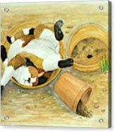 Cat Sleeping In The Sun. Acrylic Print