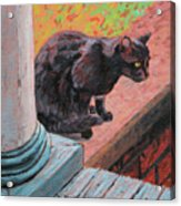 Cat's Pause 2 - Black Cat On The Front Porch Acrylic Print