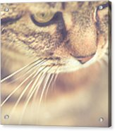 Cats Whiskers Acrylic Print