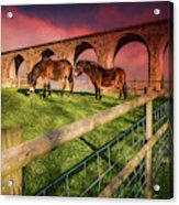 Cefn Viaduct Horses At Sunset Acrylic Print