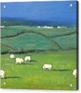 Celtic Sheep Acrylic Print