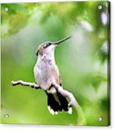Charming Hummingbird Square Acrylic Print